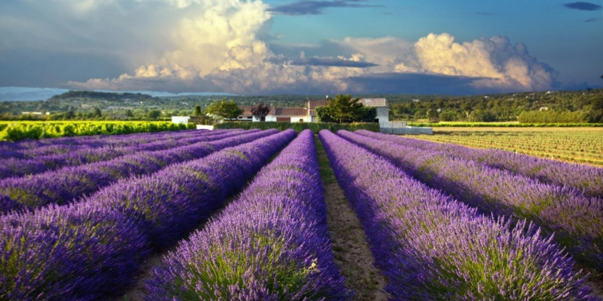Лавандовые поля Прованса, Франция - путеводитель по Франции и Провансу