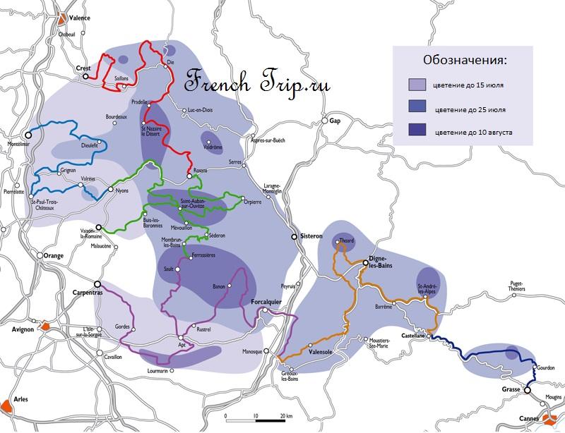 Маршруты лаванды возле Систерона: лавандовые поля и маршруты Прованса, плато Валенсоль, массив Люберон. Маршруты - описание, карта, профиль маршрута лаванды, лаванда прованс, поля лаванды прованс, лавандовое поле прованс, лавандовые поля прованс, систерон лаванда, систерон лавандовые поля, систерон лавандовое поле, систерон, систерон Франция, систерон путеводитель, систерон достопримечательности, лаванда, лаванда прованс, лаванда франция, города франции, прованс, прованс франция, путеводитель по провансу, лаванда в провансе, лавандовый маршрут прованс, дорога лаванды прованс