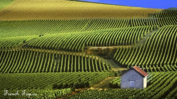 Самые красивые ландшафты Франции - Виноградники Шампани