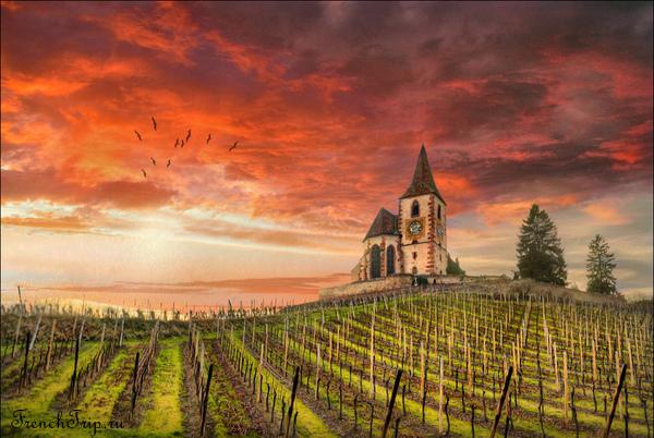 Виноградники Эльзаса, Самые красивые ландшафты Франции, Самые красивые места во Франции, природа, ущелья, виноградники, скалы, долины, куда стоит поехать во франции, лучшие места, зрелищные места Франции, Франция, города Франции, природа Франции, путеводитель по Франции, достопримечательности Франции