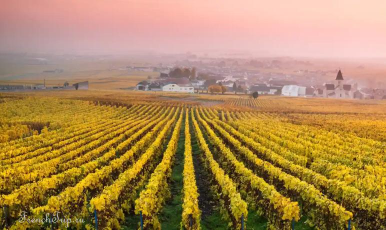 Виноградники Шампани и Коронавирус