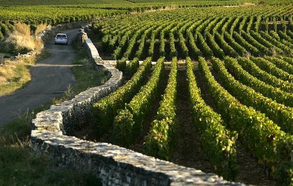 Терруары бургундских вин - виноградники Бургундии