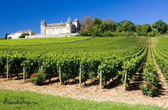 Виноградники Médoc (AOC) Medoc AOC vineyards - виноградники Медок