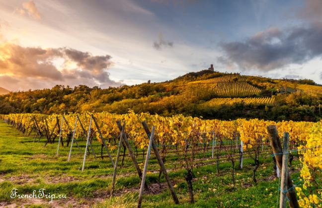 Alsace, Routes des Vins-1