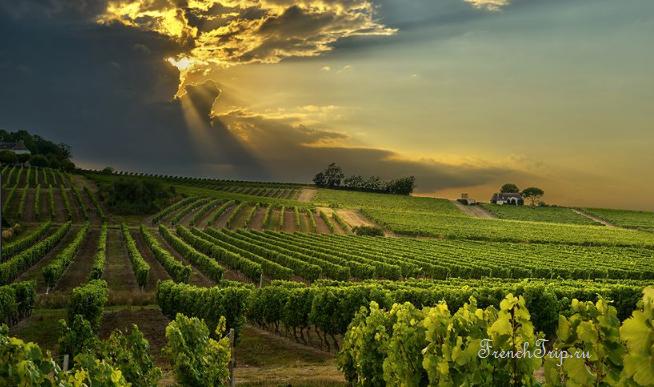 vineyards of Sancerre above Chavignol_Southwest France