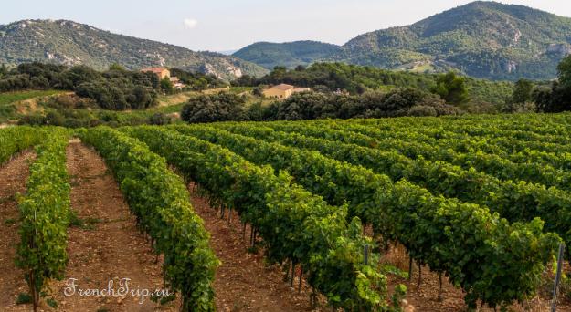 Côtes de Provence AOC vineyards Provence wine