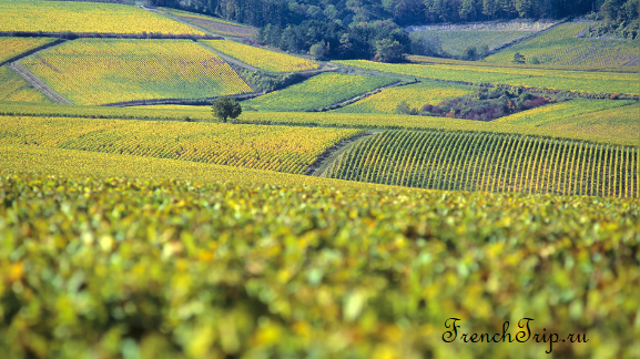 Chablis, Burgundy vineyards