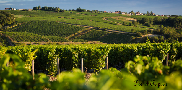 Chablis, Burgundy wine_vineyards_2