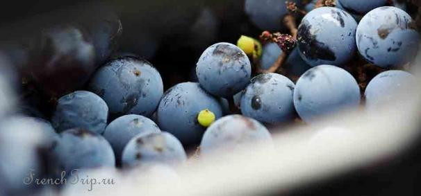 Вина Сартена (AOC Vin-de-Corse-Sartène)