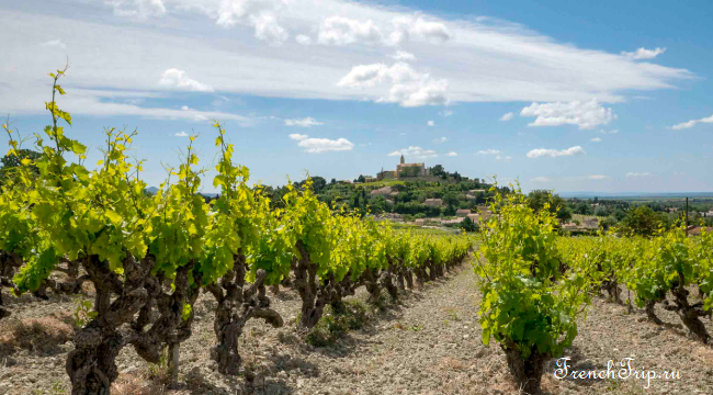 Provence Vineyards