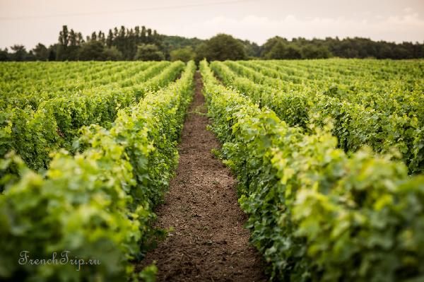Туренские вина (Touraine)