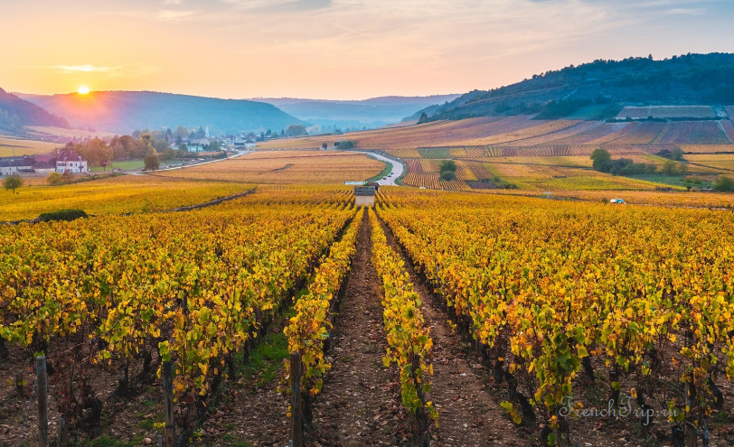 Вина Турени, вина долины Луары