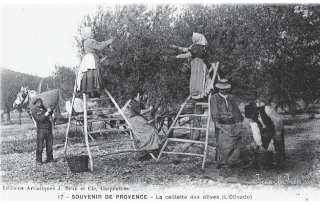 Beaumes-de-Venise olive collection Provence