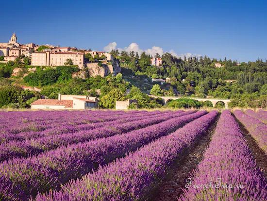 Sault, lavender