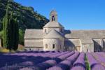 Senanque Provence lavender_6