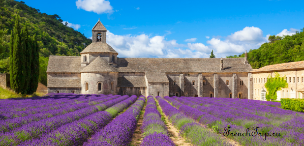 Abbaye de Sénanque