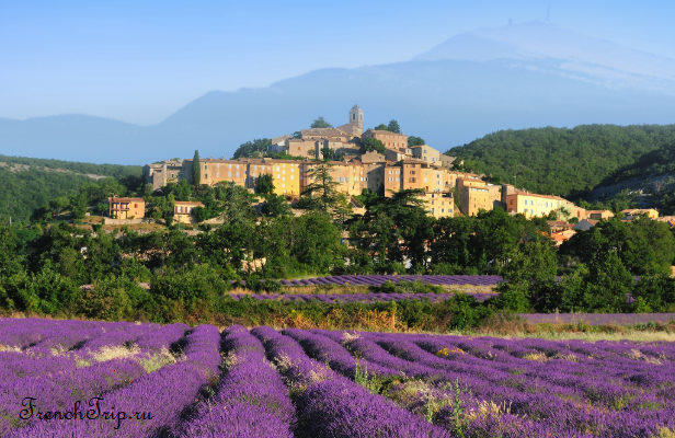 lavender fields Provence Luberon