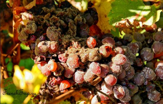 Bordeaux vineyards wine routes, Винные маршруты Бордо - карта - виноградники Бордо - wine Sauternes AOC - вина Сотерн-grape